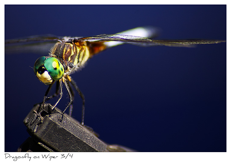 Click to purchase: Dragonfly on Windshield Wiper 3/4