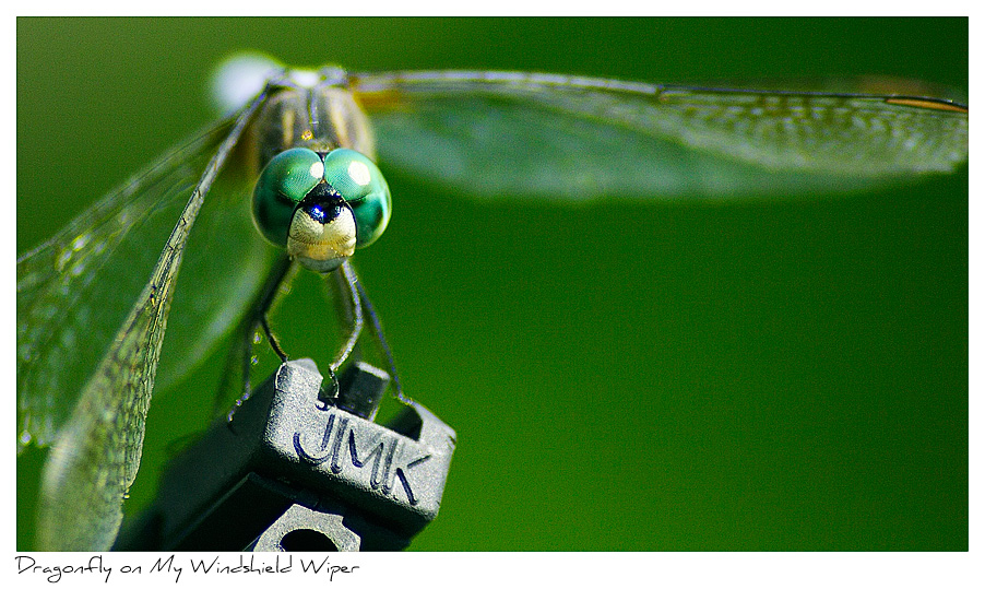 Click to purchase: Dragonfly on Wiper