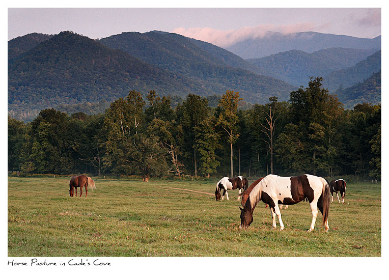 Click to purchase: Horse Pasture in Cade's Cove