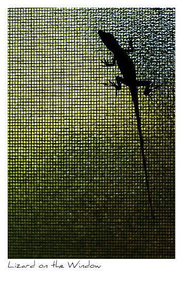 Click to purchase: Lizard on the Window